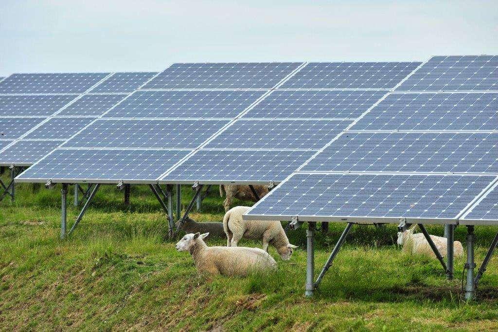 Titan-Energy_Solar-sheep_Connecticut